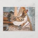chicken hen art pet portrait post card cards art postcard