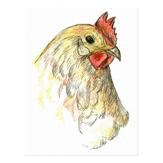 Chicken Hen Bird Farm Animal Drawing Postcard