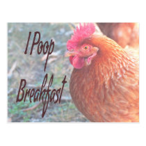 Chicken I poop Breakfast Funny Humor Postcard