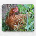 Chicken in the Grass Mousepad