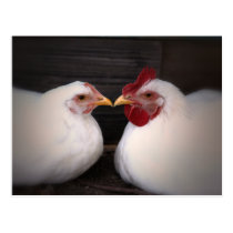 Chicken Love Postcard