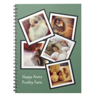 Chicken Pictures Hatching Incubating Chickens Notebook