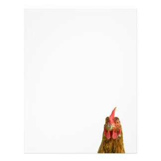 Chicken Portrait Letterhead