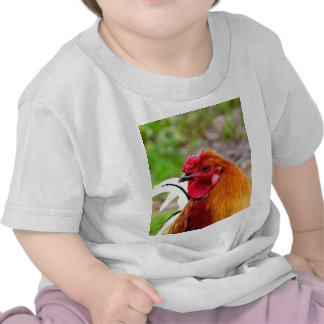 Chicken Rooster waiting for true love T Shirts
