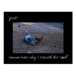 'Chicken Secrets' photo postcard