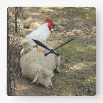 Chicken Sitting on a Sheep Clock
