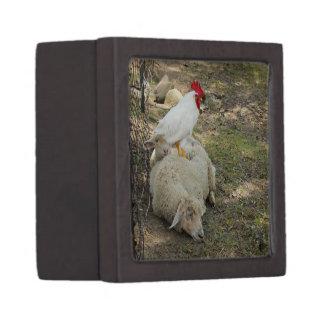 Chicken Sitting on a Sheep Gift Box