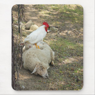 Chicken Sitting on a Sheep Mousepad