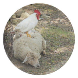 Chicken Sitting on a Sheep Plate