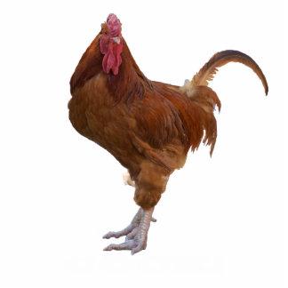Chicken Statue