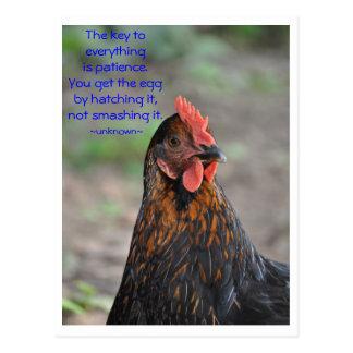 Chicken Wisdom - patience Postcard
