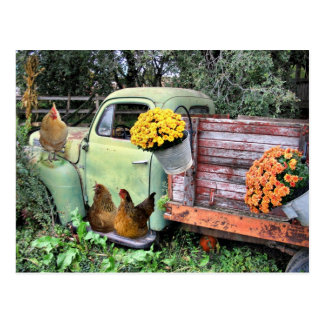 Chickens and old pick up truck postcard