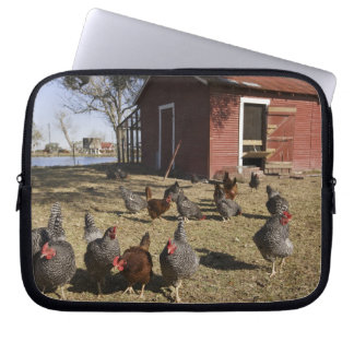 Chickens working grounds near hen house Cliburn Computer Sleeve