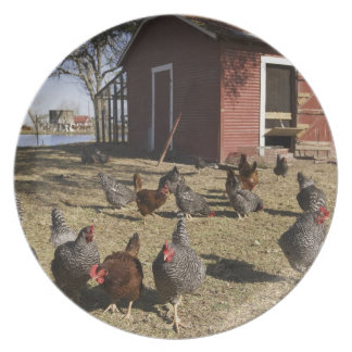 Chickens working grounds near hen house Cliburn Melamine Plate