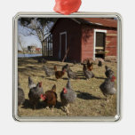 Chickens working grounds near hen house Cliburn Metal Ornament