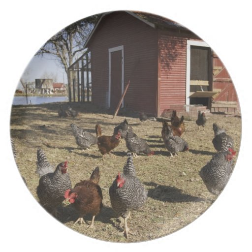 Chickens working grounds near hen house Cliburn Party Plate