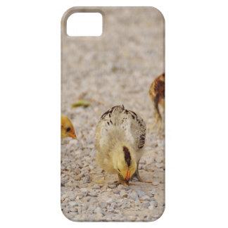 Chicks #2 iPhone SE/5/5s case
