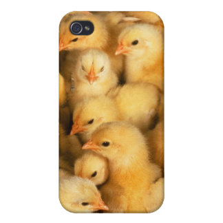 Chicks baby chickens iPhone 4 cover