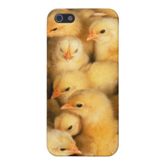 Chicks baby chickens iPhone SE/5/5s case