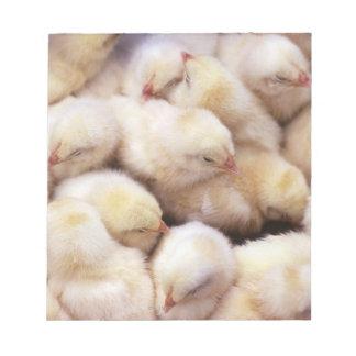 chicks, brood of chickens memo pad