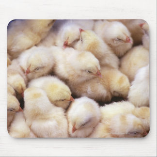 chicks, brood of chickens mouse pad