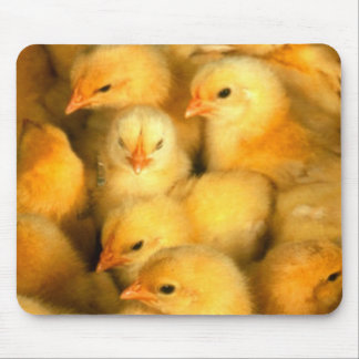 Chicks Mouse Pad