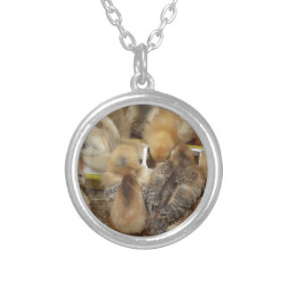 Chicks on straw eating feed in the chicken coop silver plated necklace