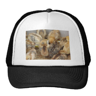 Chicks on straw eating feed in the chicken coop trucker hat