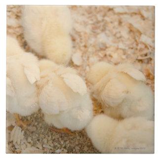chicks tile