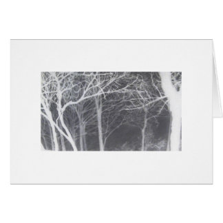 Chico trees in winter night card