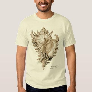 Chicoreus ramosus (Chicoreus inflatus). Shirts