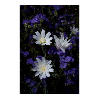 Chicory and Phacelia Wildflowers Poster