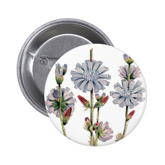 Chicory Pins
