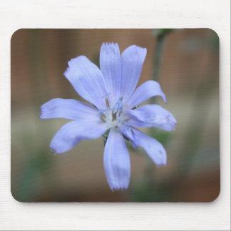 Chicory (Cichorium intybus) Mouse Pad