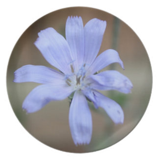 Chicory Dinner Plate
