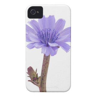 Chicory flower iPhone 4 case