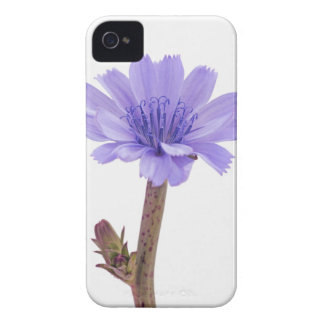 Chicory flower iPhone 4 Case-Mate case