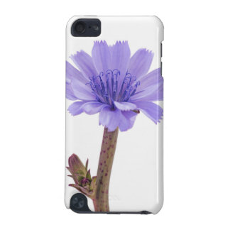 Chicory flower iPod touch 5G case