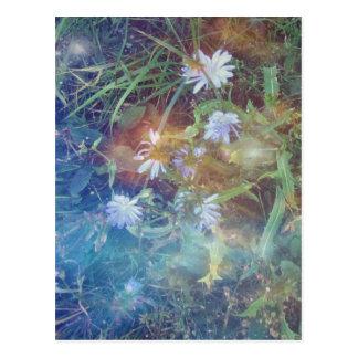 Chicory Grass Postcard