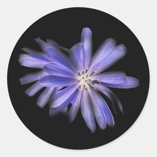 chicory purple blue flower classic round sticker