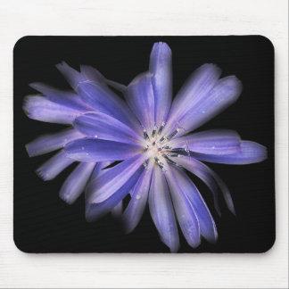 chicory purple blue flower mouse pad