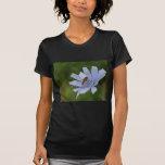 Chicory Shirts