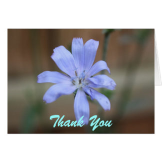 Chicory Thank You Note Cards