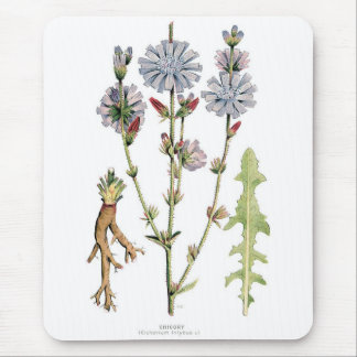 Chicory Vintage Botanical Mouse Pad