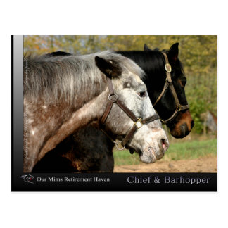 Chief - Appaloosa from the movie Prancer Post Card