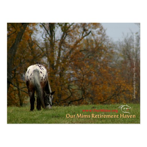Chief - Appaloosa in the move Prancer Post Cards