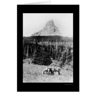 Chief Mountain from Glacier National Park 1925 Cards