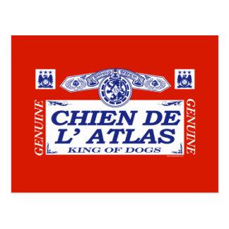 Chien De L'Atlas Postcard