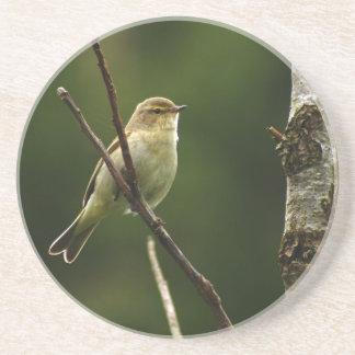 Chiffchaff bird perched on branch coaster
