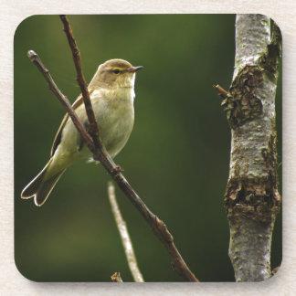 Chiffchaff bird perched on branch drink coaster